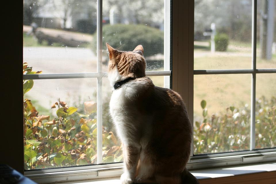 Cat, Shadow, Light, Window, Indoors, Pet