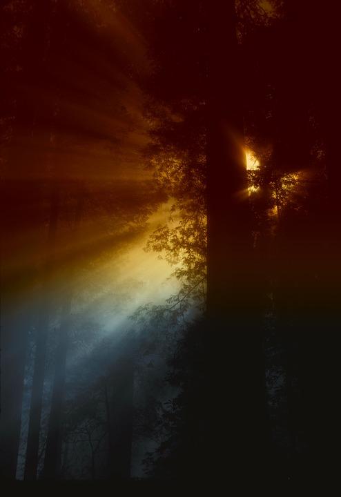California, Sun, Rays, Light, Sunlight, Forest, Trees