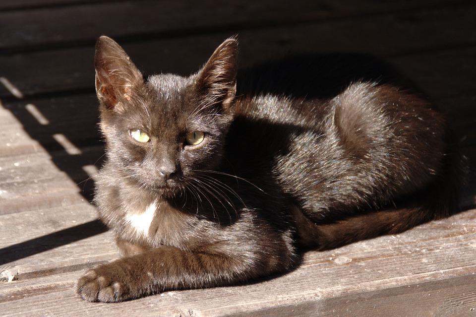 Animal, Cat, Eyes, Black, Light, Shadow