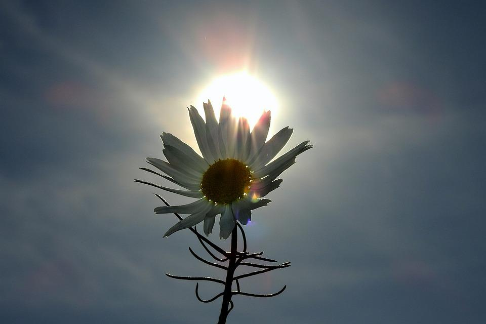 Flower, The Sun, Clear, Light, Sky, Clouds