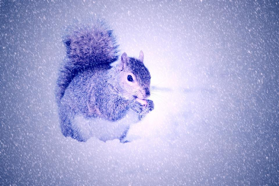 Squirrel, Winter, Snow, Light