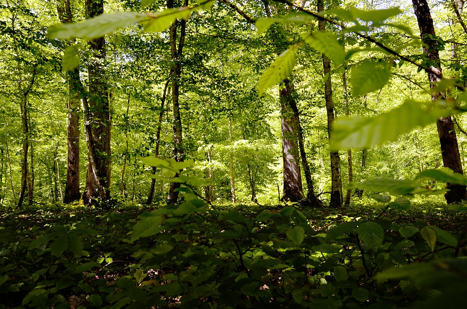 Forest, Light, Nature, Trees, Green, Scenic, Spring