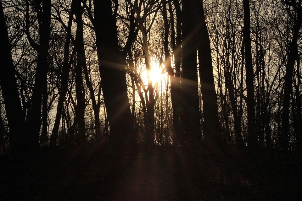 Sun, Light, Forest, Nature, Beams, Sunlight, Orange