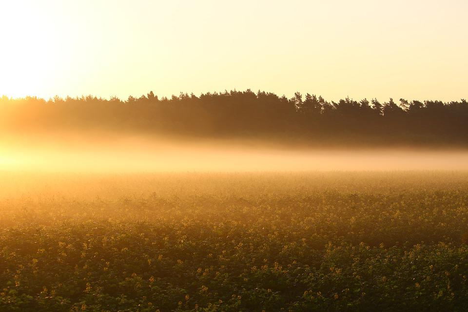Fog, Sunrise, Field, Meadow, Nature, Light, Mood