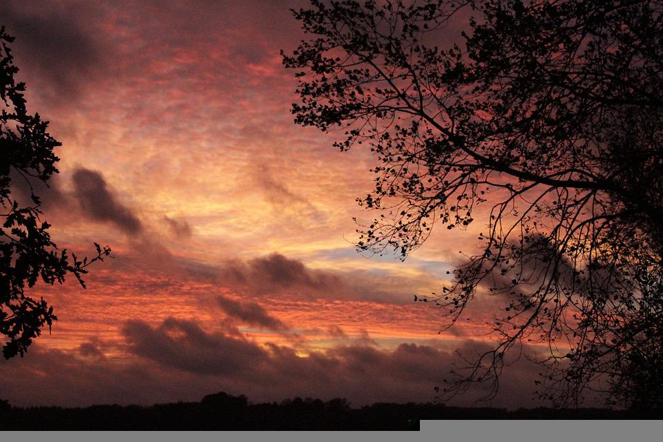 Sunset, Autumn, Mood, Nature, Leaves, Light