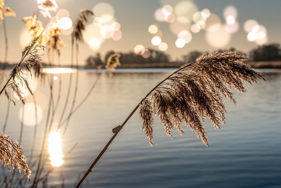 River, Bank, Plants, Grass, Sunset, Sunrise, Light