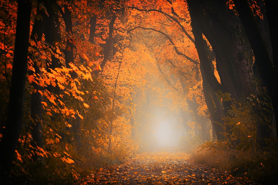 Light, Away, Road, Path, Forest, Trees, Autumn, Red