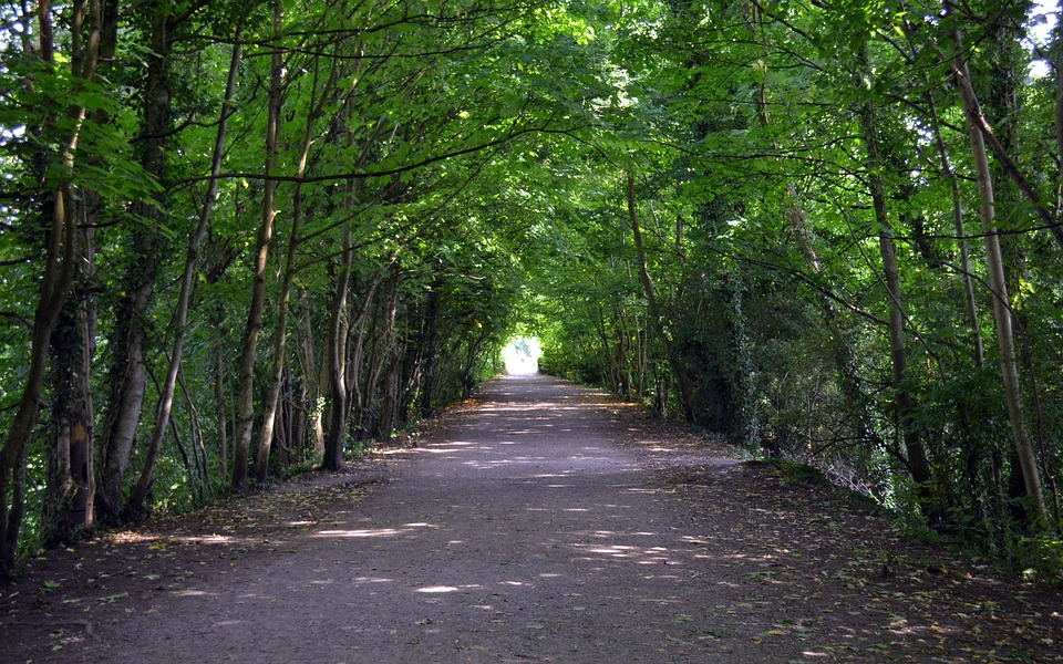 Trees, Tunnel, Path, Light, The Lake District, Cumbria
