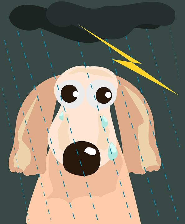Dog, Homeless, Lightening, Rain, Storm, Thunderstorm