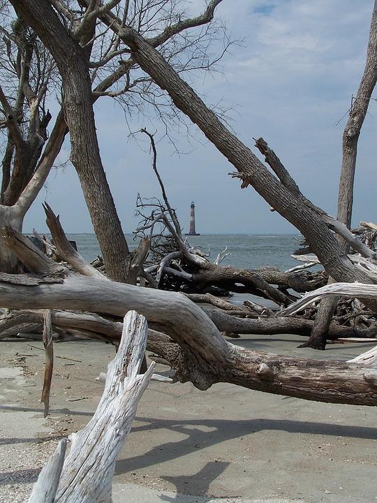 Water, Ocean, Beach, Folly Beach, Driftwood, Lighthouse
