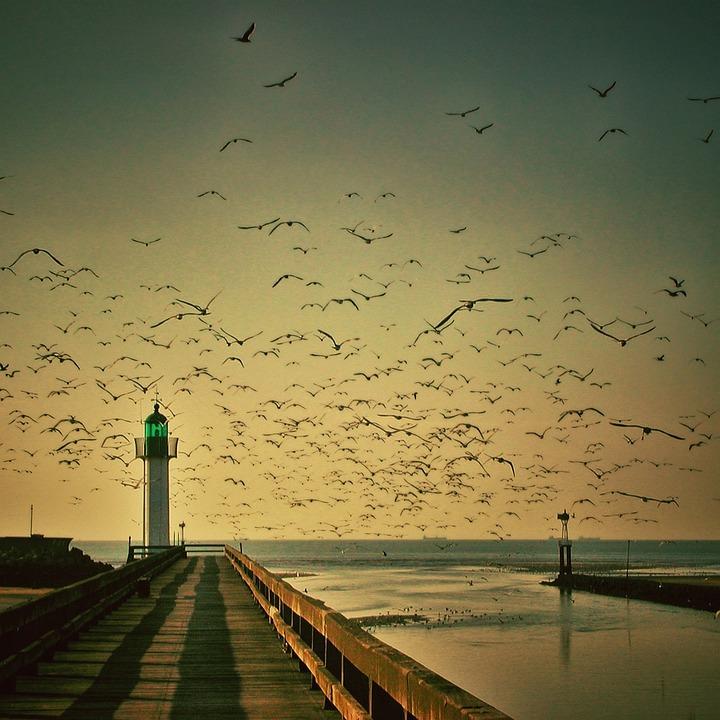 Lighthouse, Gulls, Sky, Seagull, Fly, Sea, Water