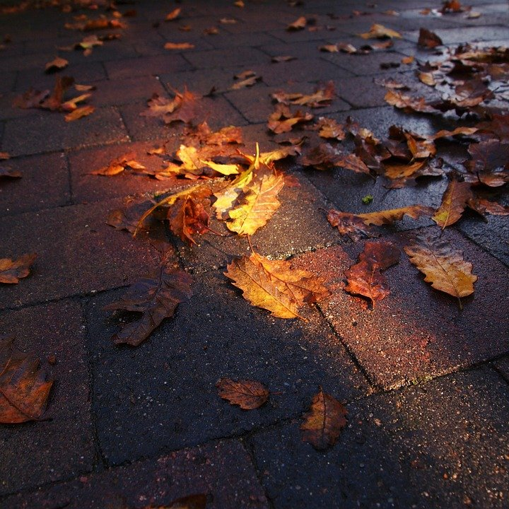 Lighting, Autumn, Pavement, Colors, Nature, Leaves, Sun
