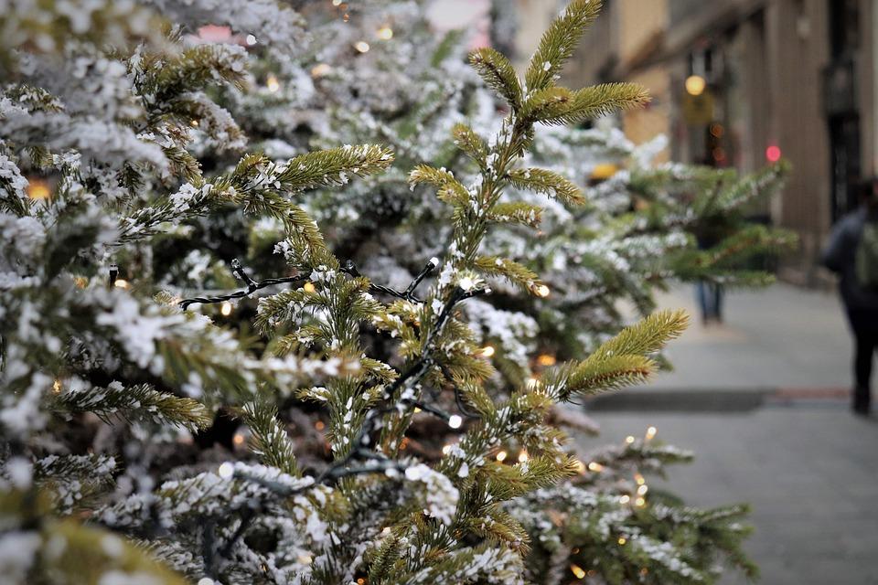 Christmas Tree, Fir, Lights, Street, Christmas Mood