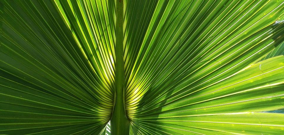 Palma, Leaf, Lights, Nature