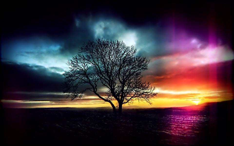 Sunset, Tree, Lights, Background