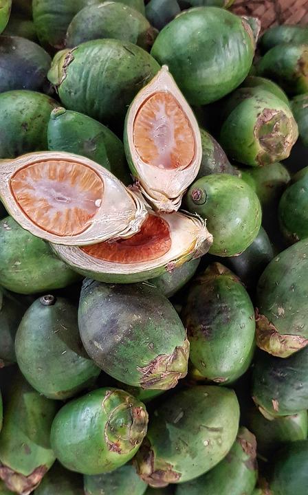 Betel Nut, Betel Palm, Chewed, Like Tobacco