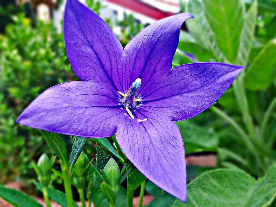 Lila, Flower, Violet, Houseplant, Flowering