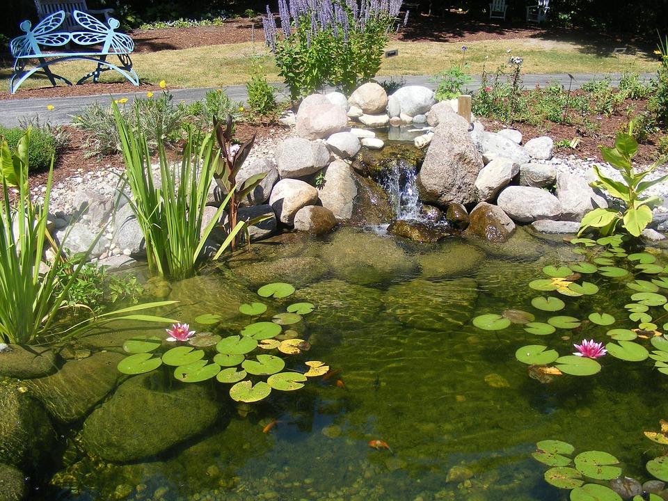 Pond, Lilly Pad, Park