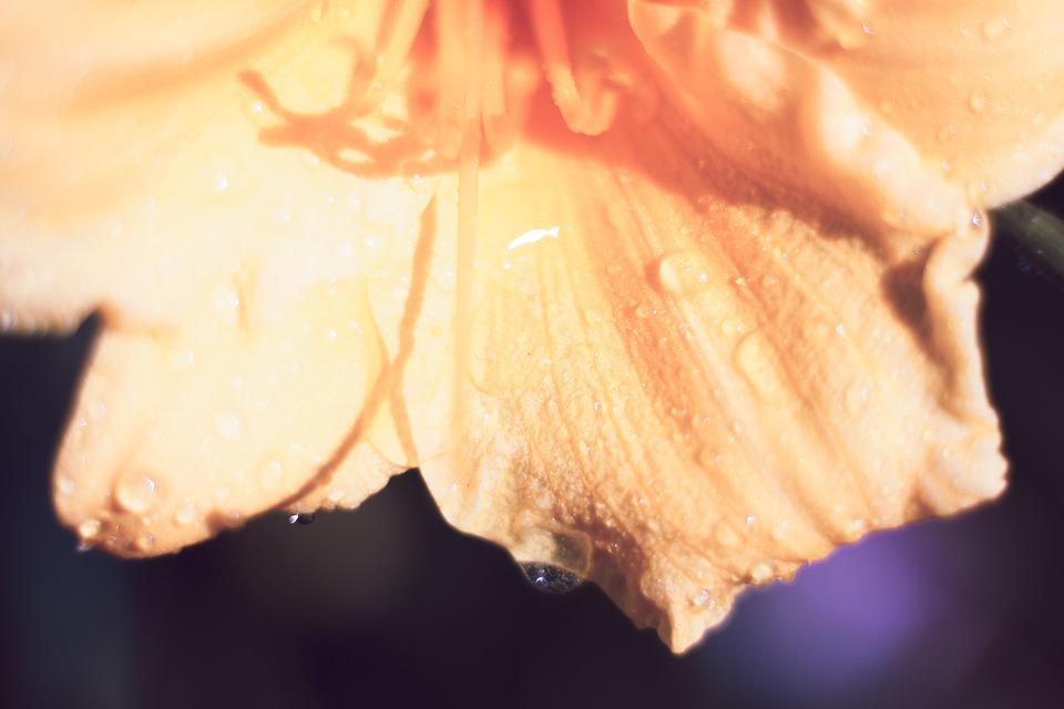 Lily Flower, Orange, Yellow, Blooming, Bloom, Petals
