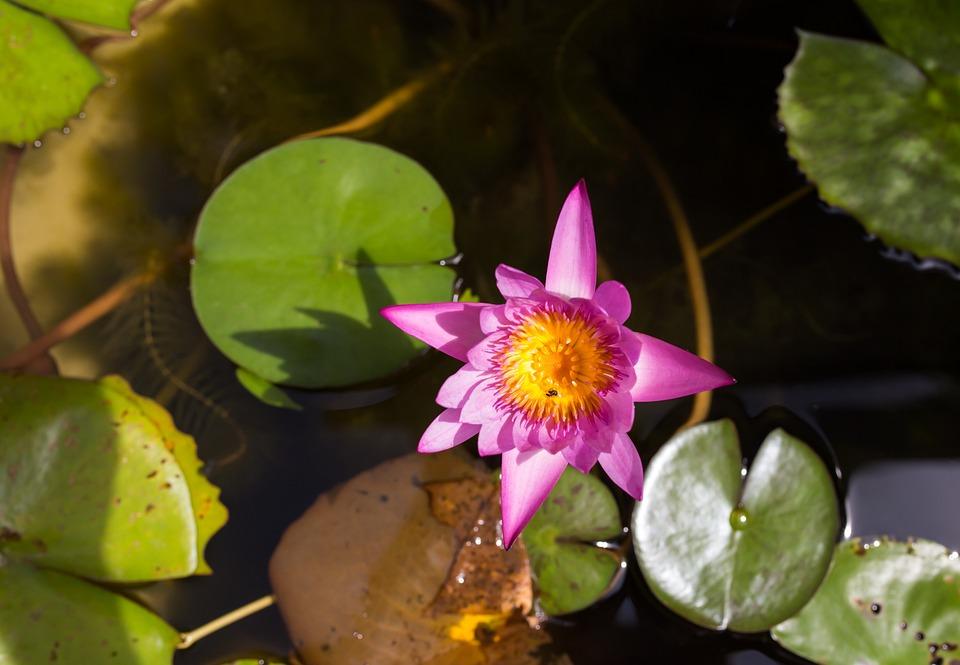 Flower, Horn, Lily