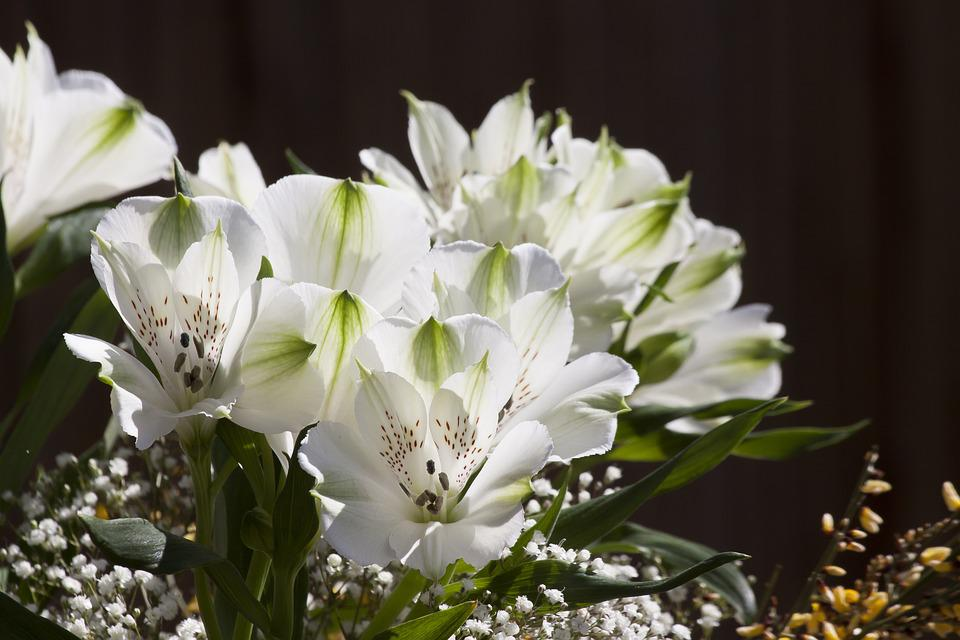 Lily, White, Flower, Plant, Nature, Flowers, Garden