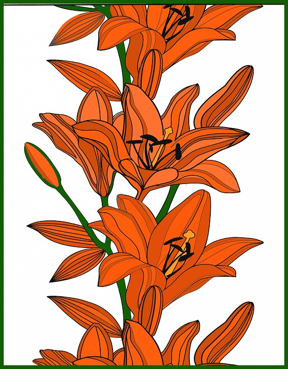 Lily, Flowers, Orange, Lilly, Spring