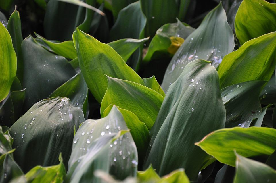 Lily Of The Valley, Grass, Leaves, Drops, Rain, Plant