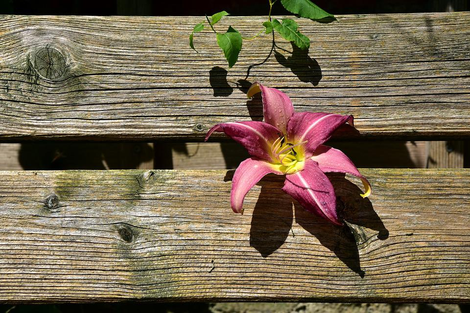 Lily, Wood, Boards, Nature, Overgrown, Leaves, Ornament