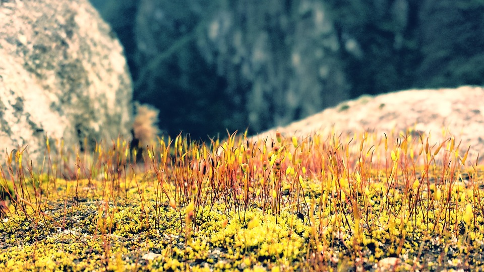 Moss, Rock, Andes, Limestone, Growth, Plants