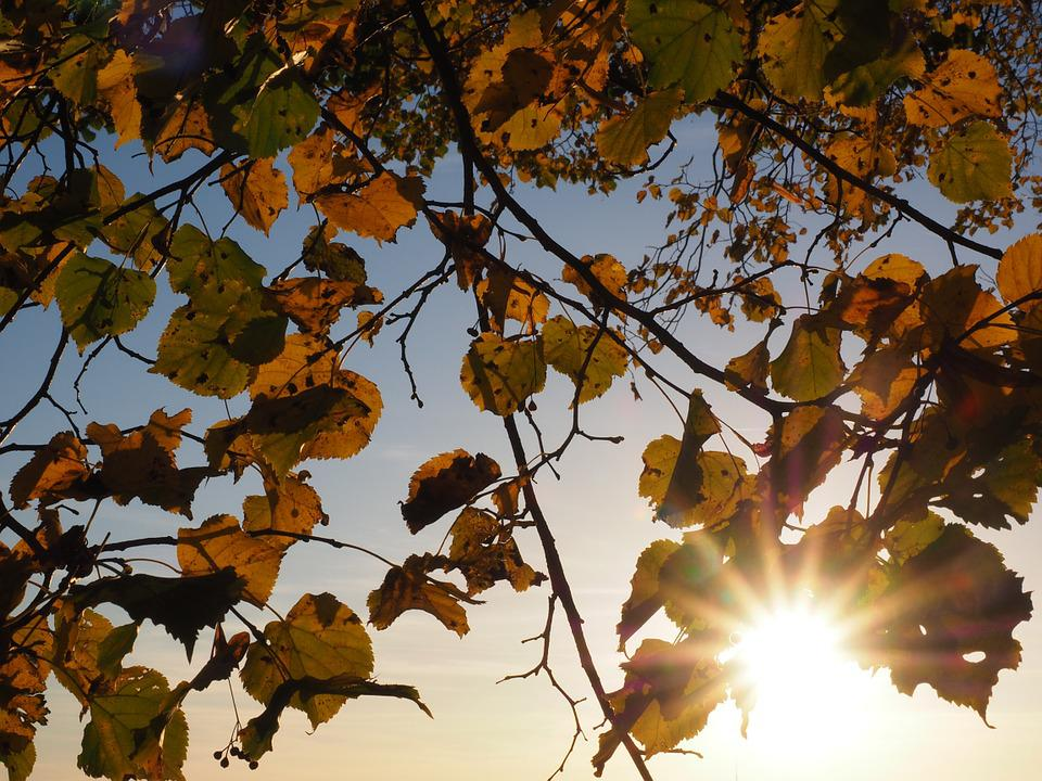 Leaves, Sun, Sonnenstern, Dazzling Star, Linde