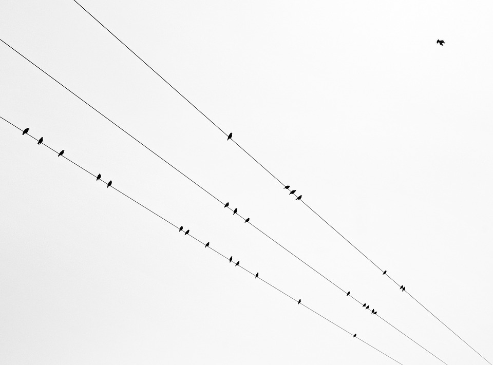 Birds, Line, Autumn, Black, White, Graphically, Fly