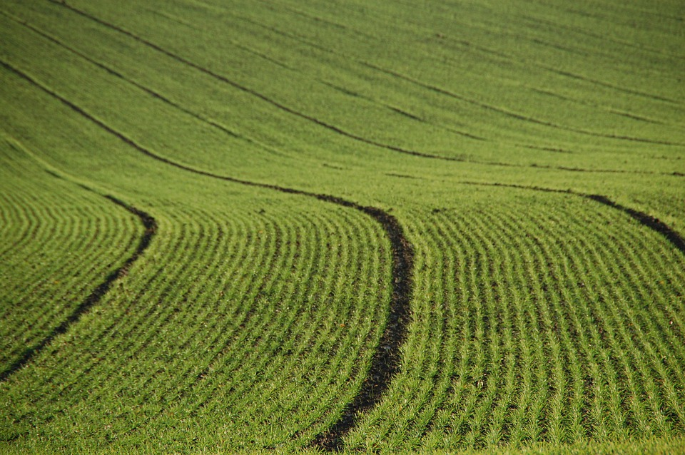 Field, Agriculture, Lines, Furrows