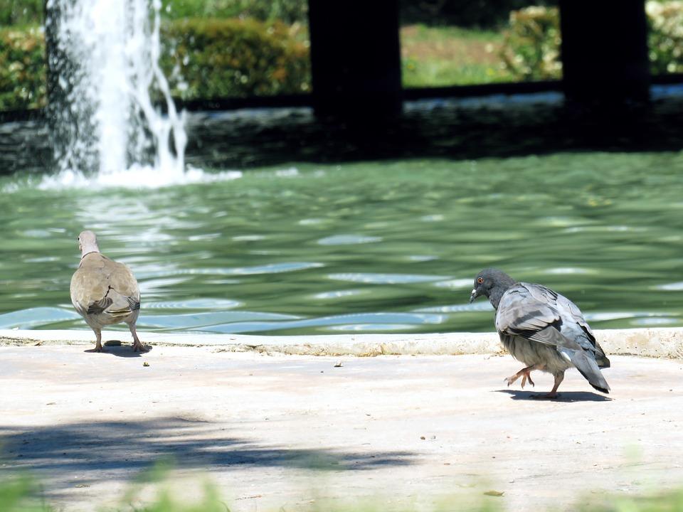 Paloma, Link, Approach, Try, Nature, Birds