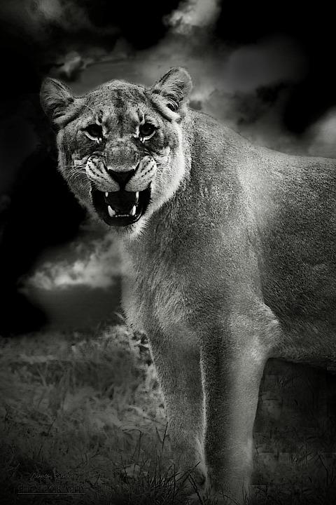 Lion, Animal, Predator, Africa, Lioness, Animal World