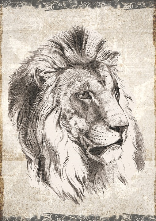 Lion, Male, Wildlife, Animal, Wild, Nature, Carnivore