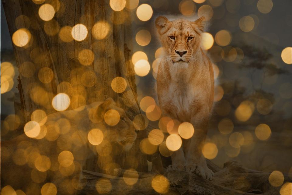 Lion, Predator, Lights, Night, Wildcat, Großkartze