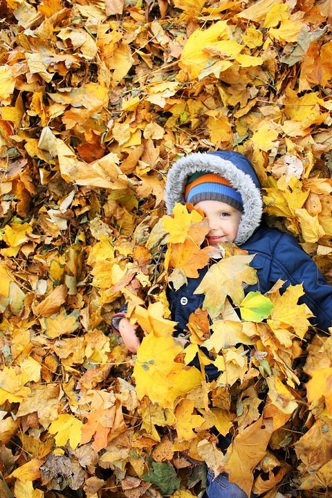 Autumn, Leaves, Yellow Leaves, Listopad, Golden Autumn