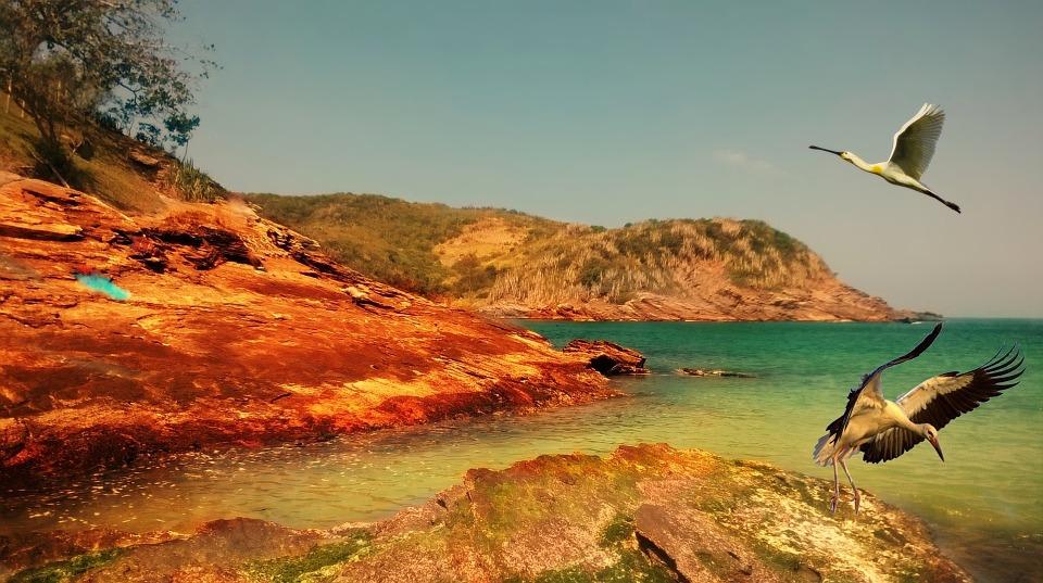 Mar, Island, Ocean, Birds, Heron, Rocks, Litoral, Beach