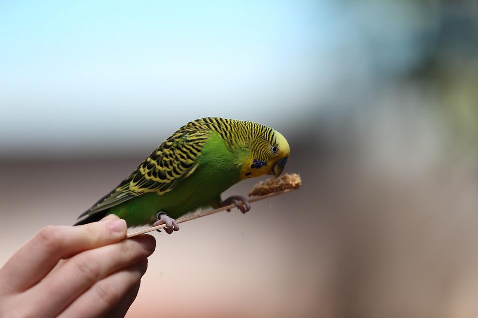 Nature, Wildlife, Outdoors, Animal, Little, Wild, Bird