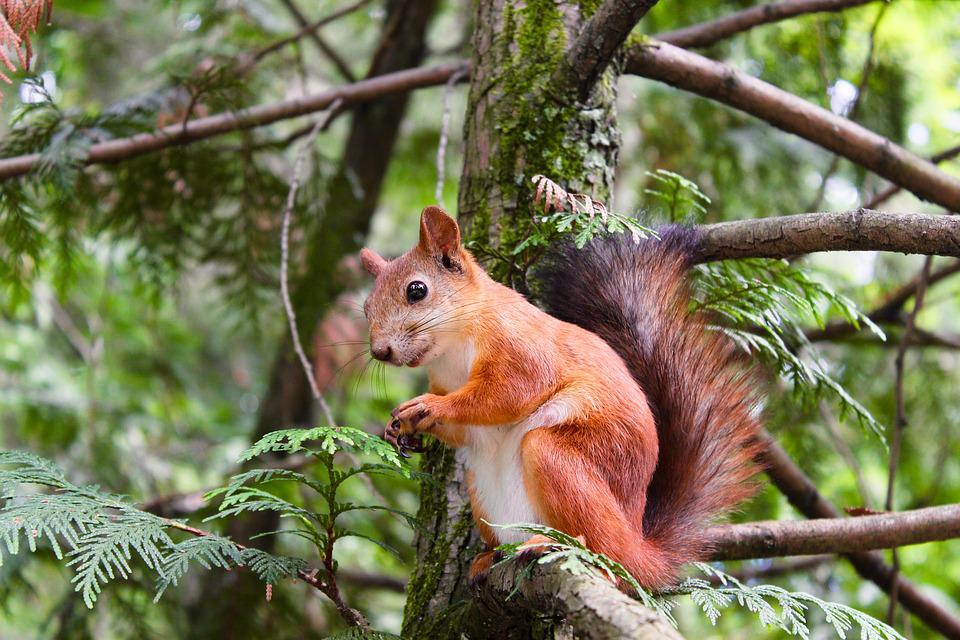 Animal, Squirrel, Rodent, Branches, Little, Nature
