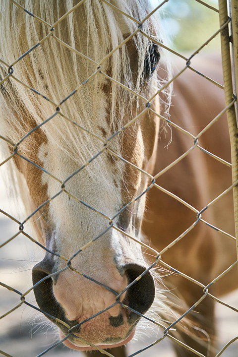 Horse, Pony, Puppies, Little, Mane, Feather, Equestrian
