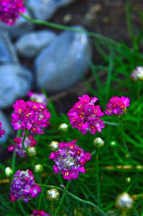 Free photo little flower love flower nature garden pink max pixel pink flower little flower nature garden love mightylinksfo