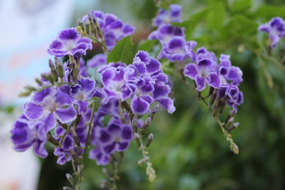 Free photo little flower purple flowers flowers max pixel flowers little flower purple flowers mightylinksfo