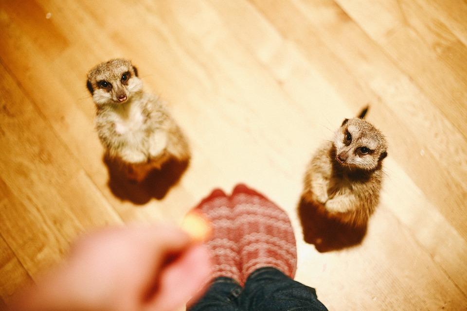 Animal, Cute, Feeding, Fur, Indoors, Little, Looking