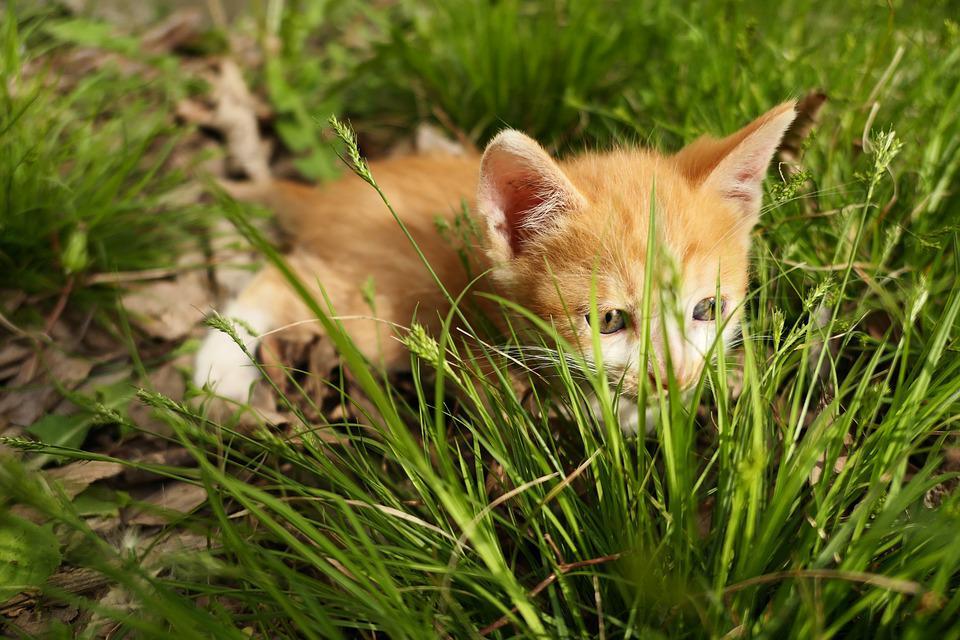 Kitten, Peep, Little, Cute