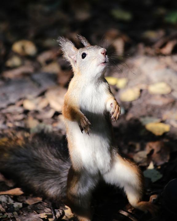 Cute, Mammals, Living Nature, Nature, Little