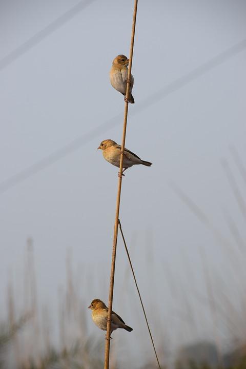 Bird, Wildlife, Nature, Animal, Outdoors, Little