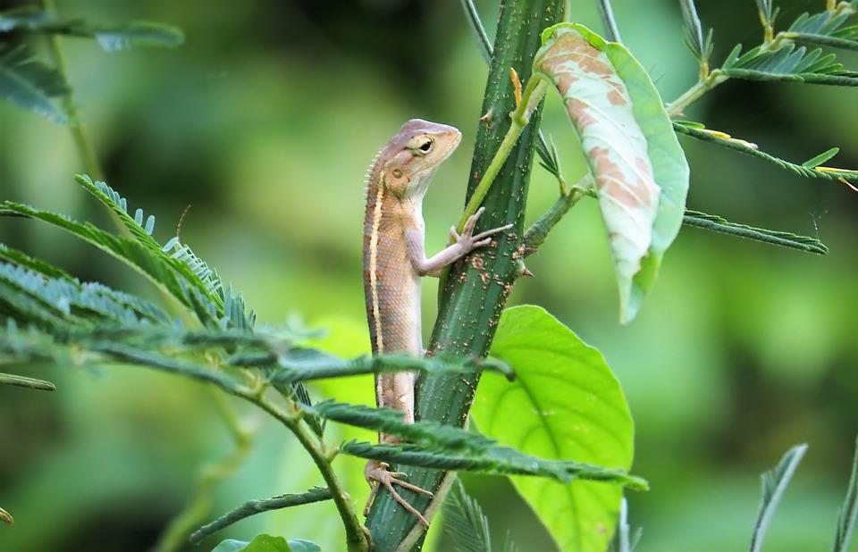 Nature, Animal, Wildlife, Leaf, Outdoors, Little, Wild