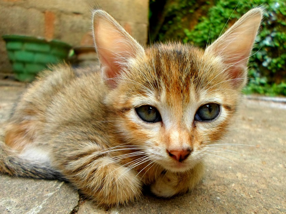 Cats, Kittens, Animals, Mammals, Baby, Small, Little