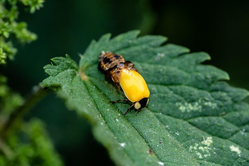 Ladybug, Birth, Hatching Ladybug, Live New